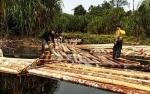 Dinas Kehutanan Kalteng: Rakit Kayu di Sungai Mantangai Kapuas Hasil Pembalakan Liar