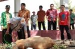 Pemkab Seruyan Potong Dua Hewan Kurban