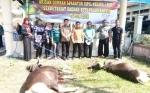 ASN Setda Kota Palangka Raya Potong Dua Ekor Sapi Kurban
