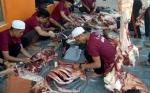 Seekor Hewan Kurban di Kotim Ditemukan Mengandung Cacing