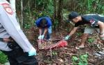 Heboh Ditemukan Tengkorak Manusia di Barito Timur