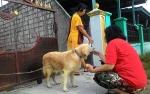 DKPP Siapkan Kuota 25 Ekor Anjing Jantan Lokal untuk Program Steril Gratis