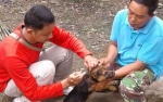 2.912 Ekor Hewan di Kapuas Tervaksinasi Rabies