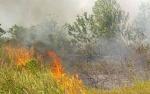 Kebakaran Lahan Juga Melanda Wilayah Kecamatan Bukit Batu