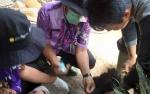 DKPP Sukamara Targetkan 3.000 Ayam dan Bebek Divaksin ND