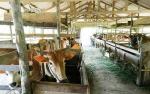 Dinas Pertanian Laksanakan Program Peningkatan Produksi Peternakan