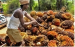 Terbuka Peluang Peningkatan Ekspor CPO ke India