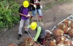 Sawit Sumbermas Setuju Pemerintah Evaluasi Izin Lahan Sawit di Kawasan Hutan