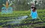 Program Replanting Sawit Dongkrak Bisnis Bibit