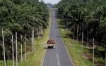 Rupee Lesu, India Pangkas Impor CPO dari Indonesia dan Malaysia