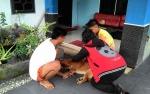 Tata Cara Pemeliharaan Hewan di Palangka Raya Diatur dalam Perwali