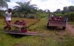 Imbas Lesunya CPO, Penjualan Sampoerna Agro Turun 10%