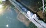 Polisi Selidiki Kasus Penemuan Mayat di Sungai Tengkawang