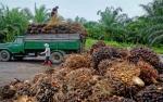 Analis: Penurunan Pungutan Ekspor CPO Positif Bagi Emiten Perkebunan
