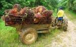 SPKS: Moratorium Sawit Untungkan Petani