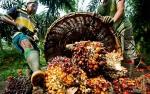 AS Mulai Tambah Impor Minyak Sawit dari Indonesia
