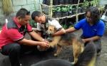 Palangka Raya Belum Miliki Perda Penanganan Rabies