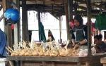 Harga Jual Ayam Potong di Katingan Dipengaruhi Pemasok