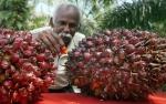 India Bakal Pangkas Bea Masuk CPO 2019