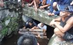 Buaya Muncul di Selokan Air Jalan Junjung Buih III Sempat Dikira Biawak