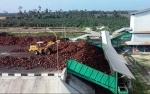 Tiga Pabrik Sawit Sumbermas di Kalteng Kantongi Sertifikat RSPO