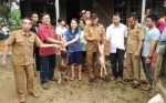 Mayoritas Bantuan Ternak dari Dana Aspirasi DPRD Gunung Mas