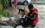 Vaksinator Temukan Banyak Masyarakat Pelihara Puluhan Anjing dan Kucing