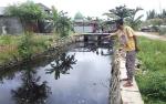 Buaya Kembali Muncul di Sungai Selokan Junjung Buih III