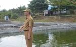 Dinas Perikanan Sukamara Intensifkan Pembinaan Pembudidaya Ikan Kolam