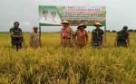 DKPP Sukamara Harapkan Panen Padi Tahun Ini Melimpah