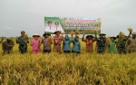 Optimalisasi dan Perluasan Lahan Pertanian Perlu Dukungan Tambahan Alsintan