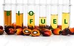 Untuk Biodiesel, Indonesia Jauh Lebih Maju dari Negara Lain