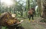 Pelaku Industri Sawit Malaysia Dukung Aksi Balasan Terhadap UE