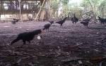 Sistem Kandang Tertutup Mampu Tekan Angka Kematian Ayam