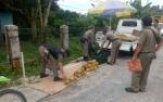 Pedagang Buah di Kasongan Diamankan Satpol PP Karena Jualan di Bahu Jalan