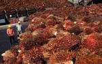 Austindo Tak Henti Penetrasi ke Pasar Ekspor Non-Tradisional