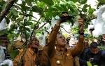 Video Wali Kota Palangka Raya Tinjau Kebun Buah Slamet