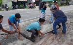 Ular Piton Sepanjang 4 Meter Ditemukan di Bawah Kamar Mandi Rumah Warga