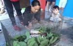 Warga Antang Kalang Serahkan Bayi Orangutan