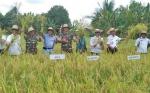 Program Food Estate Bakal Jadikan Kalteng Lumbung Pangan Nasional