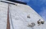 Ini Video Burung Hantu Pemangsa Walet Terjerat Perangkap Warga