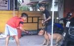 Populasi Anjing di Palangka Raya Capai 7.000 Ekor
