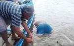 Korban Kecelakaan Tug Boat Ditemukan