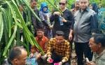 Pemkab Kotim Canangkan Kandan Jadi Desa Agrowisata Buah Naga