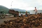 Sama dengan RI, Malaysia Moratorium Seluruh Perluasan Lahan Sawit