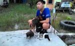 Legislator Imbau Pemilik Anjing Jaga Peliharaan