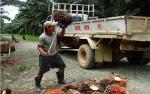 Larangan CPO untuk Biofuel di UE Cermin Mentalitas Gaya Kolonial