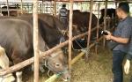 Peternak di Sampit Khawatirkan Kebijakan Impor Sapi
