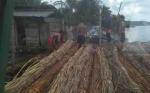 Evaluasi Larangan Ekspor Rotan Diharapkan Jawab Kegalauan Petani