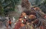 Berharap India Dongkrak Harga CPO Awal Pekan Ini